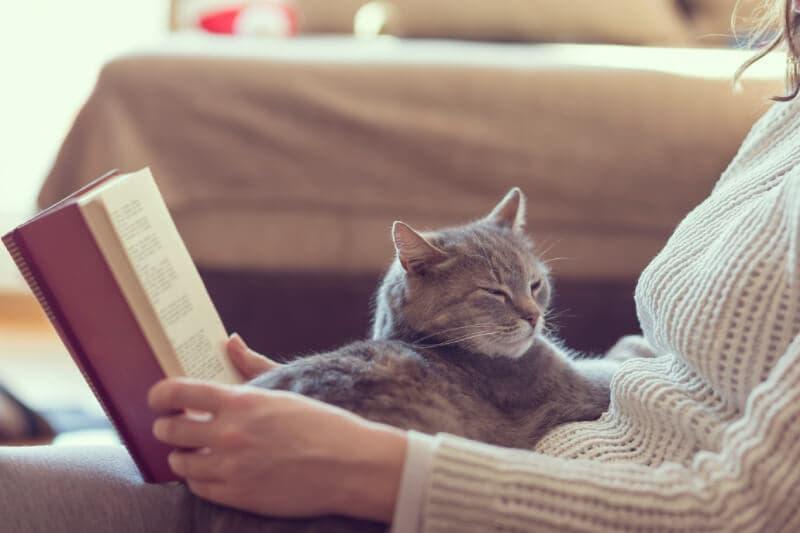 和貓咪一起讀書