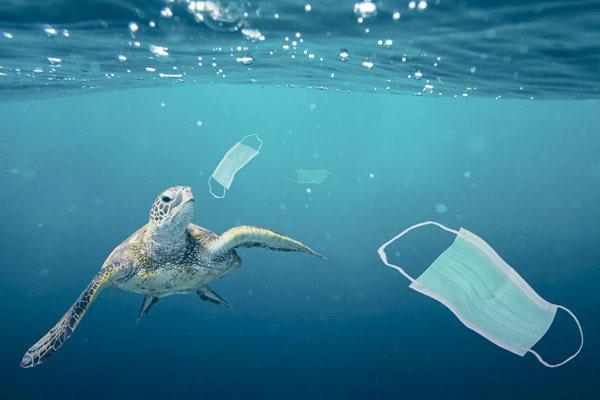 """疫情垃圾衝擊海洋生態 """"COVID Waste"""" Found in Oceans"""
