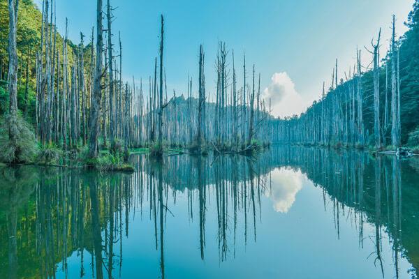 阿里山水漾森林|探尋凋亡之美 Mountain Views and Wooded Settings in Alishan