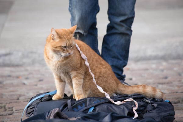 A Street Cat Named Bob 遇見街貓Bob 劇照