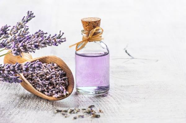 薰衣草|浪漫‧芬芳‧療癒 Lavender: A Spice, Fragrance, and Medicine?